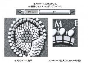 デングウイルス雑記帳3